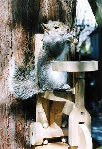Tricycle Squirrel Feeder Plan